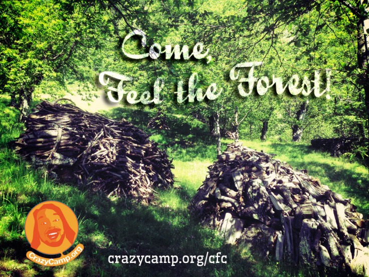 crazy camp feel the forest